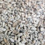 Mantar tohumu nedir?Nasıl olmalıdır?